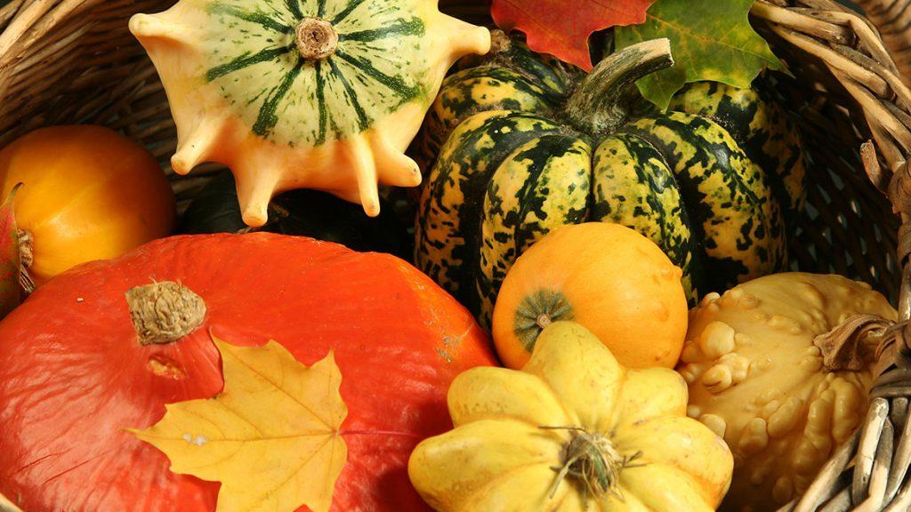 colorful pumpkin